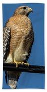 Red-shoulder Hawk Hand Towel