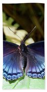 Red-spotted Purple 4257 Bath Towel