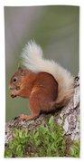 Red Squirrel On Tree Bath Towel