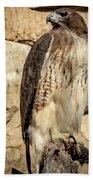 Red-tailed Hawk 4 Bath Towel