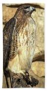 Red-tailed Hawk 5 Bath Towel