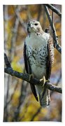 Red-tailed Hawk In The Fall Bath Towel