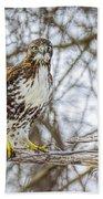 Red Tailed Hawk,  Bath Towel