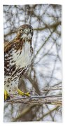 Red Tailed Hawk,  Bath Sheet by LeeAnn McLaneGoetz McLaneGoetzStudioLLCcom