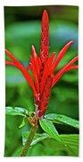 Red Tropical Flower In Huntington Botanical Gardens In San Marino-california  Bath Towel