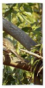 Red Wattlebird Australia Bath Towel