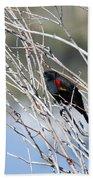 Red Winged Black Bird At Chatfield Bath Towel