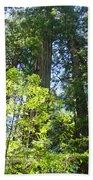 Redwoods Trees Forest Art Prints Baslee Troutman Bath Towel