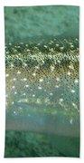 Reef Squid Bath Towel