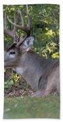 Resting Buck Bath Towel