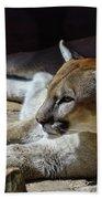 Resting Cougar Bath Towel