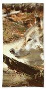 Resting Wolf Bath Towel