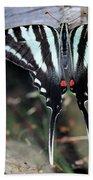 Resting Zebra Swallowtail Butterfly Hand Towel