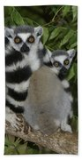 Ring-tailed Lemurs Bath Towel