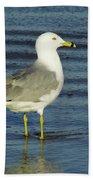 Ringed Billed Sea Gull Bath Towel