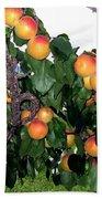 Ripe Apricots Bath Towel