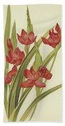 River Lily Or Crimson Flag Bath Towel