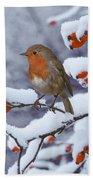Robin On Snow-covered Rose Hips Bath Towel