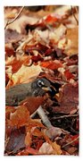Robin Playing In Fallen Leaves Bath Towel