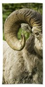 Rocky Mountain Bighorn Sheep Bath Towel