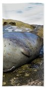 Roly Poly Seal Bath Towel