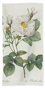 Rosa Alba Foliacea Hand Towel