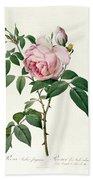 Rosa Chinensis And Rosa Gigantea Hand Towel