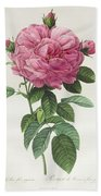 Rosa Gallica Flore Giganteo Hand Towel