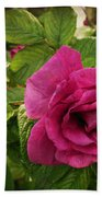 Rosa Rugosa Art Photo Hand Towel