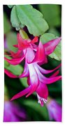 Rose-colored Christmas Cactus At Pilgrim Place In Claremont-california  Bath Towel