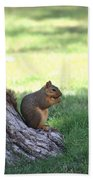 Roswell Squirrel Hand Towel