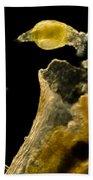 Rotifers Philodina Sp., Lm Bath Towel