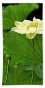 Sacred Lotus In Black Frame Bath Towel