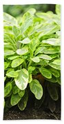 Sage Plant Bath Towel