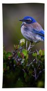 San Diego Bluebird Bath Towel