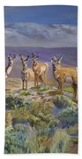 Say Cheese Antelope Bath Towel