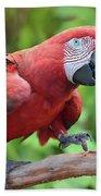 Scarlet Macaw Bath Towel