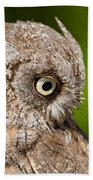 Screech Owl Portrait Bath Towel