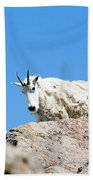 Scruffy Mountain Goat On The Mount Massive Summit Bath Towel