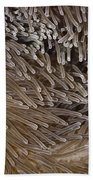 Sea Anemone Closeup Bath Towel