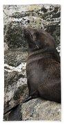 Sea Lion Close-up Bath Towel