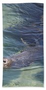 Sea Lion In Clear Blue Waters Bath Towel