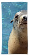 Sea Lion Or Seal Bath Towel