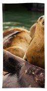 Sea Lion Pup Bath Towel