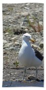 Seagull In Patagonia Bath Towel