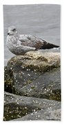 Seagull Sitting On Jetty Bath Towel