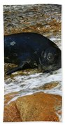 Seal Bath Towel