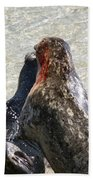 Seal Fight Hand Towel