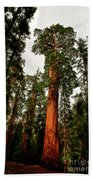 Sequoia In Kings Canyon Hand Towel