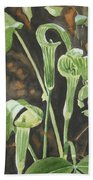 Sermon In The Woods Hand Towel